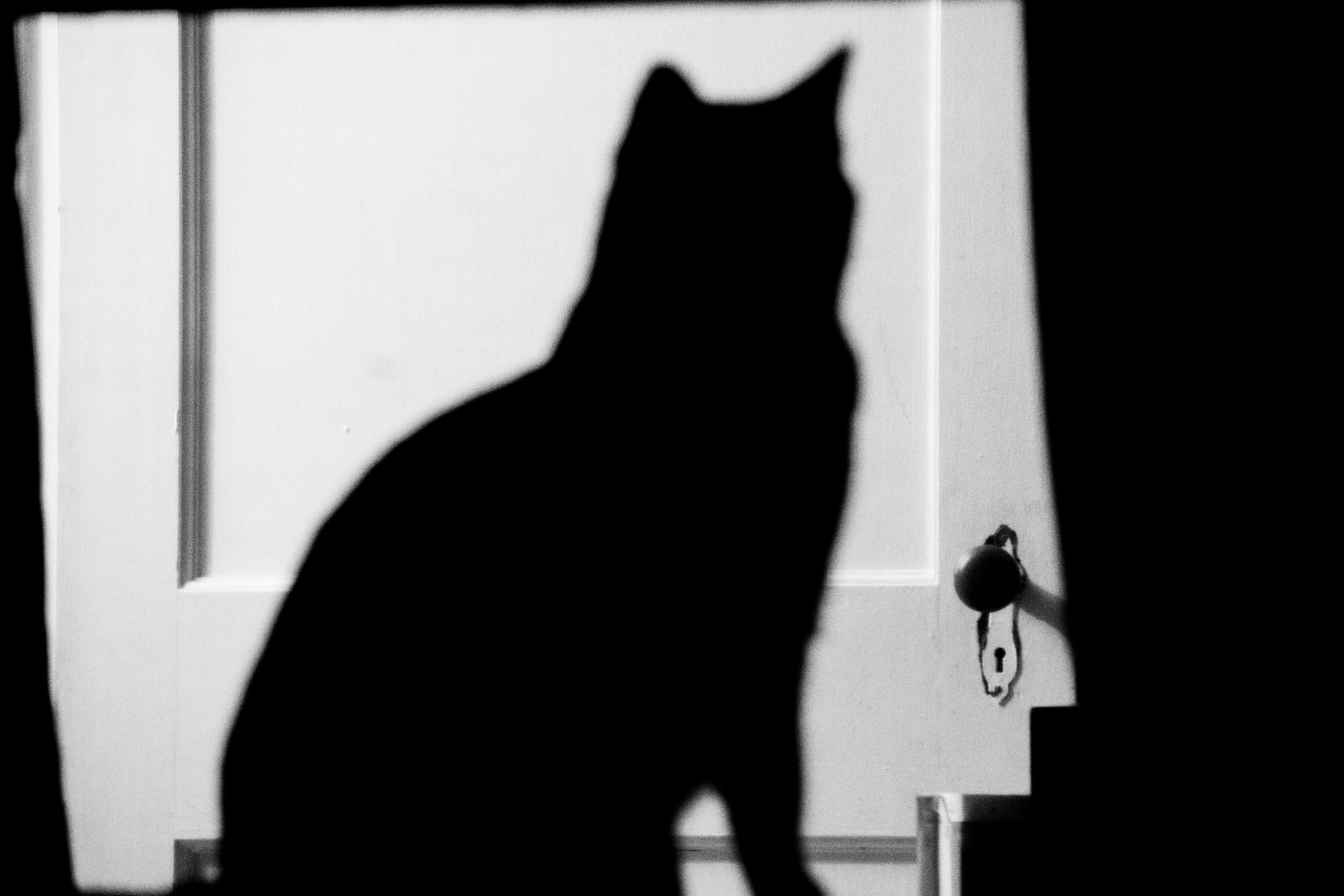 Pablito Silhouette-4.jpg