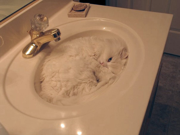 Cat Sink.png