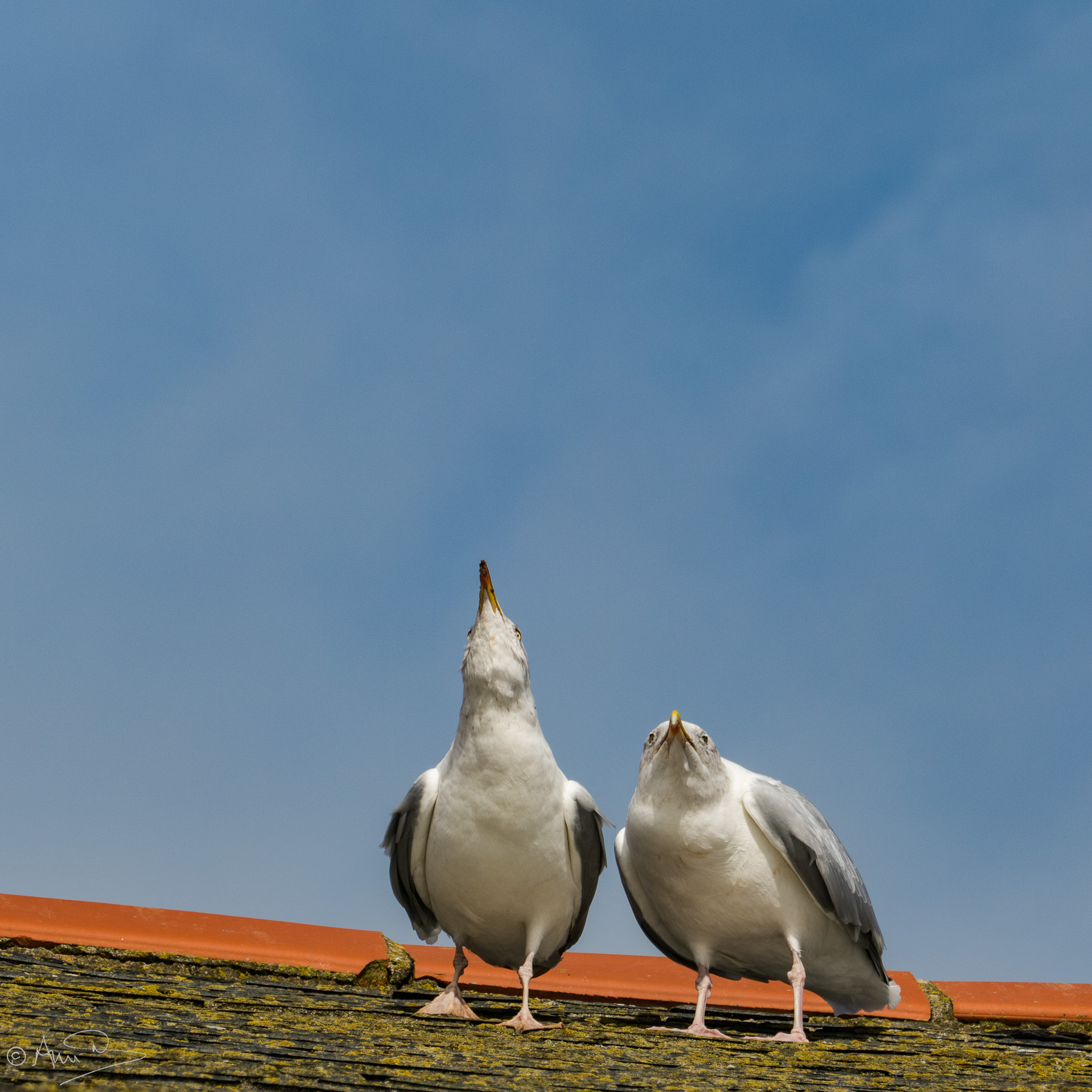 Gulls on roof.