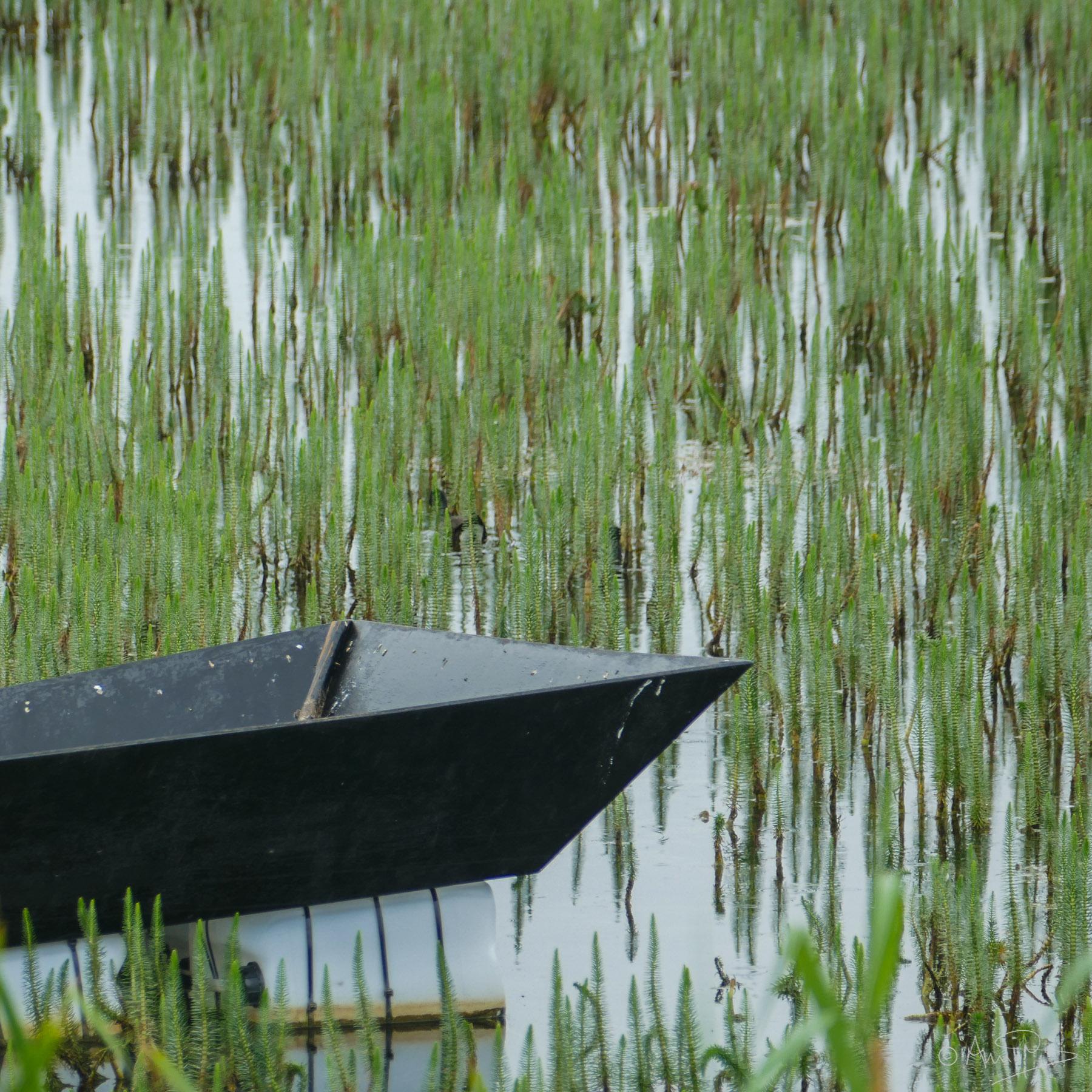 Marsh boat.