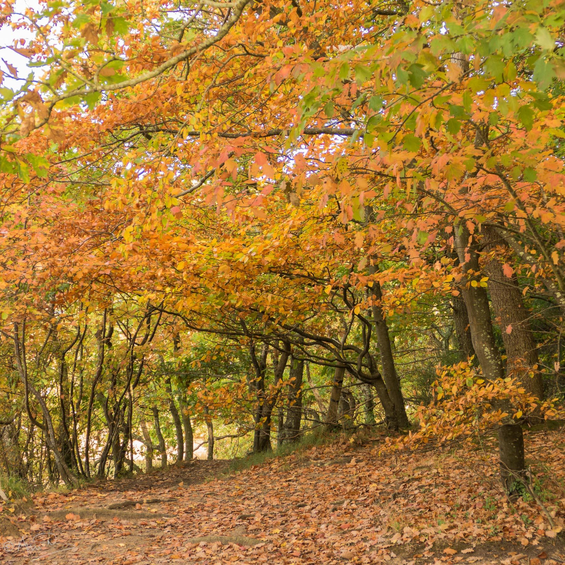 Firestone Autumn