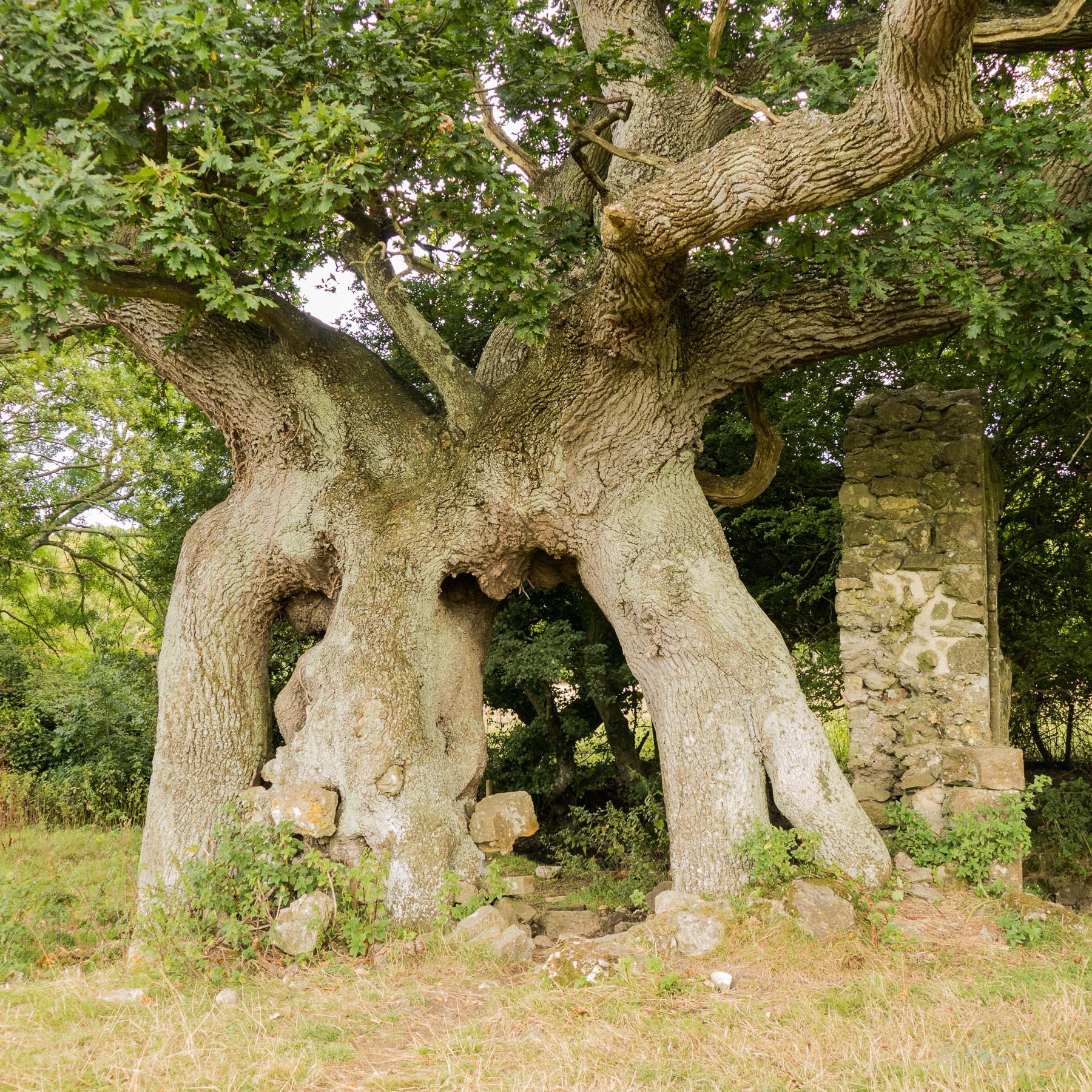 Quarr tree