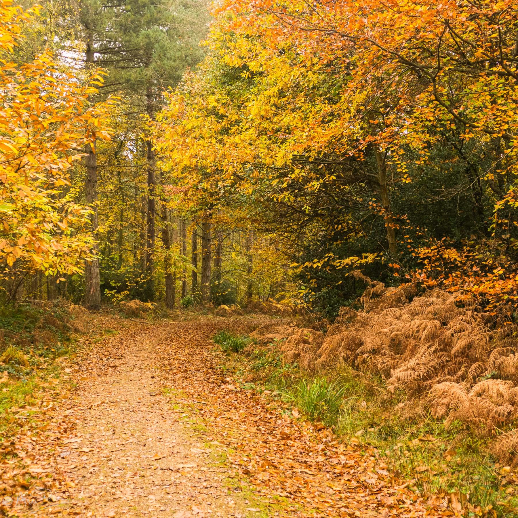 Parkhurst Autumn