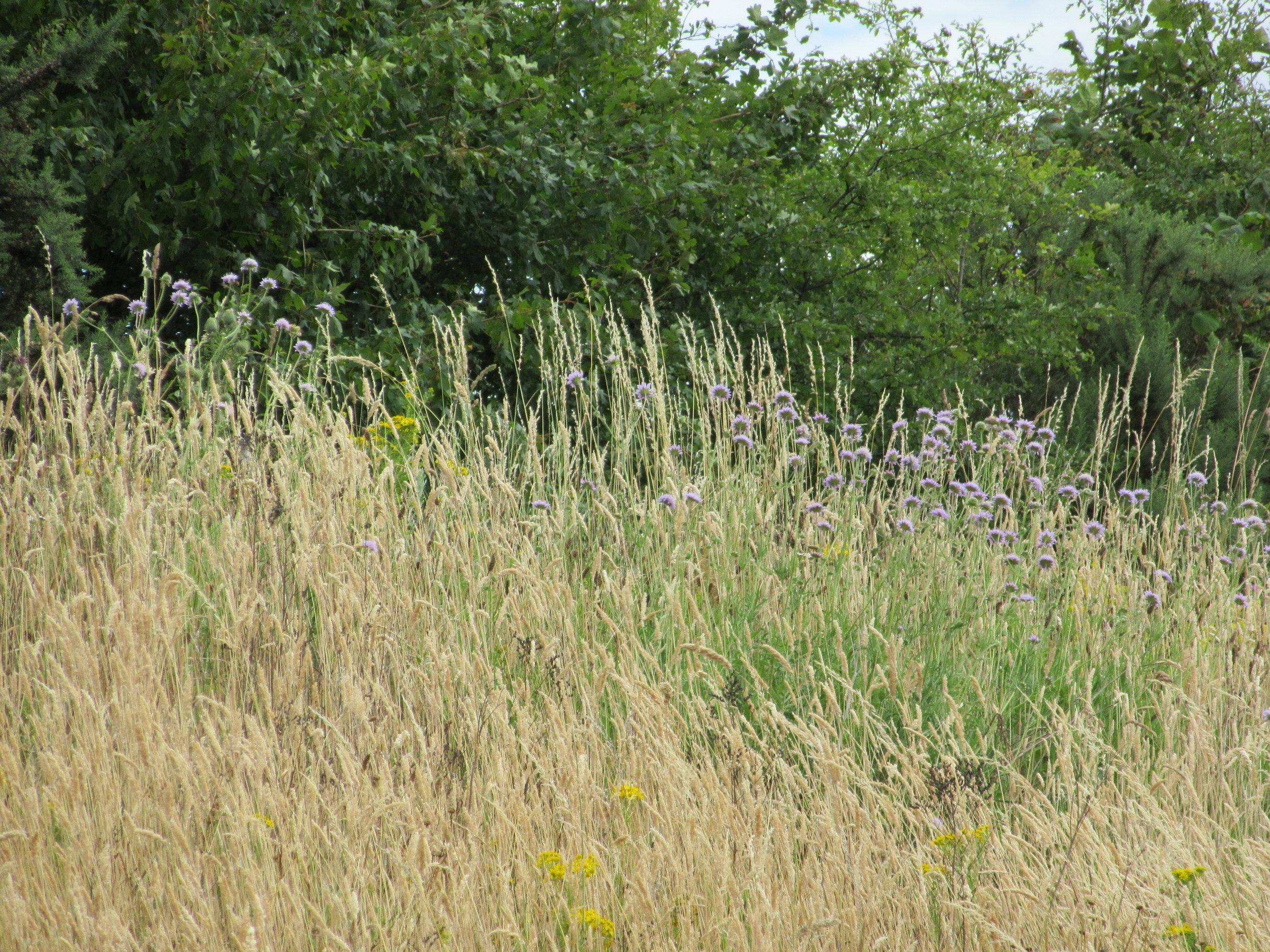 Wildflowers, grassbanks, English summers