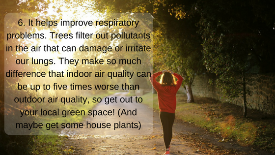 Trees improve air quality