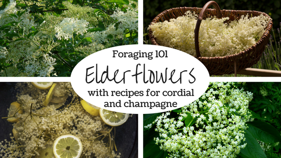 Elderflowers.png