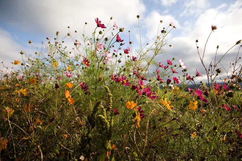 Upick flowers