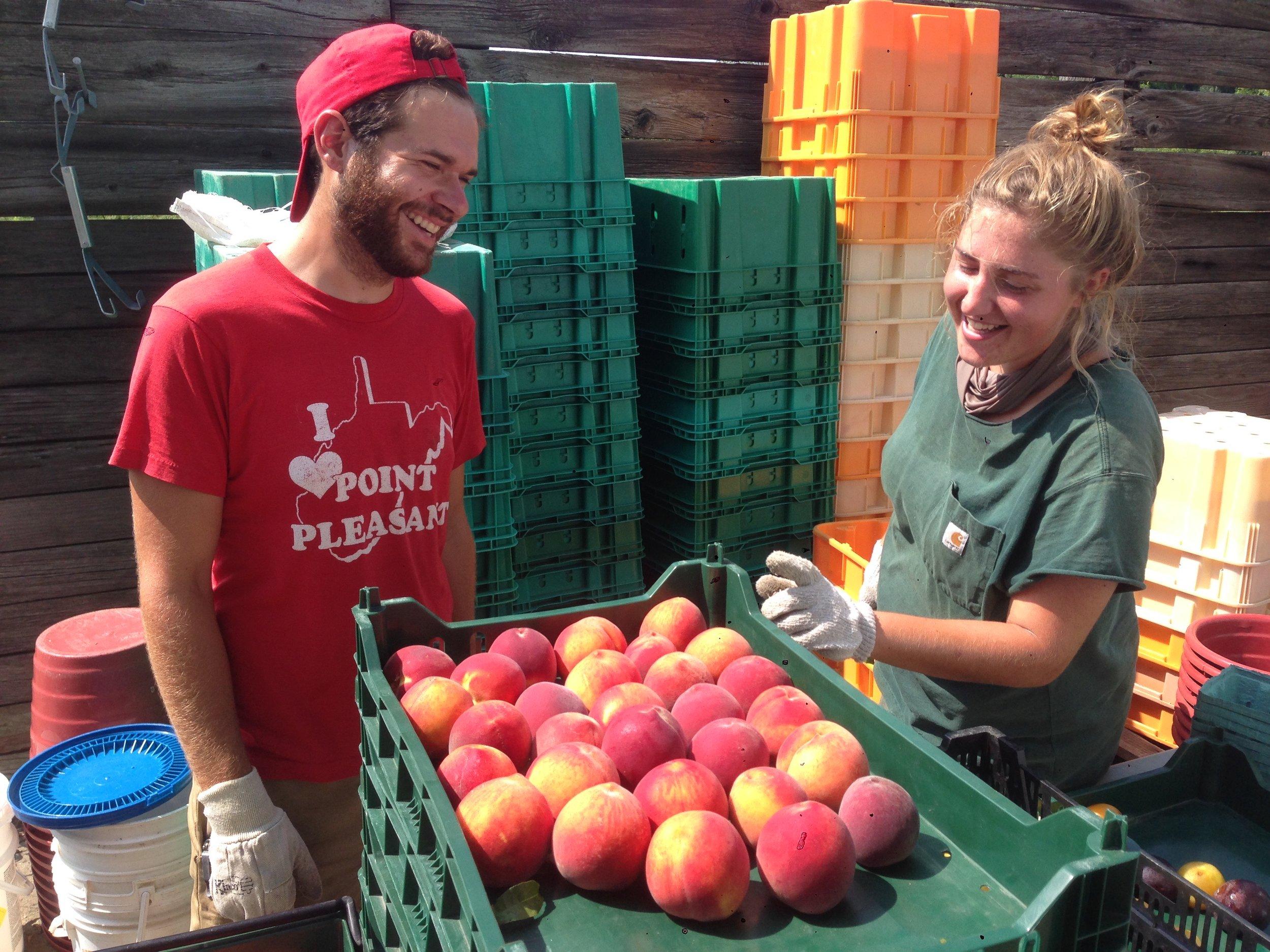 Ali Seth Grading Peaches.jpg