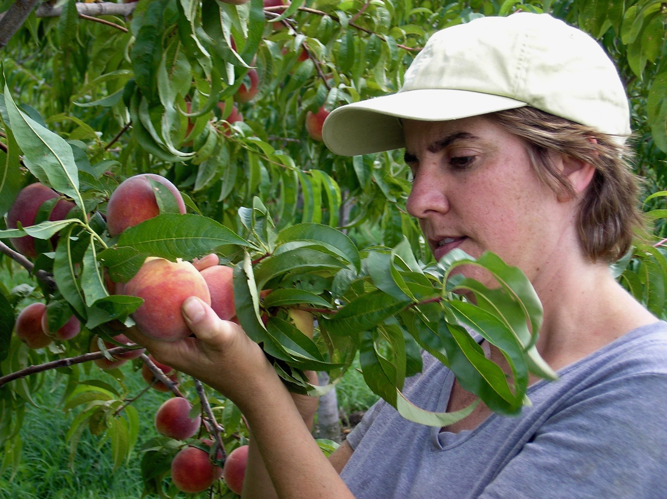 Jen Picking Peach.jpg