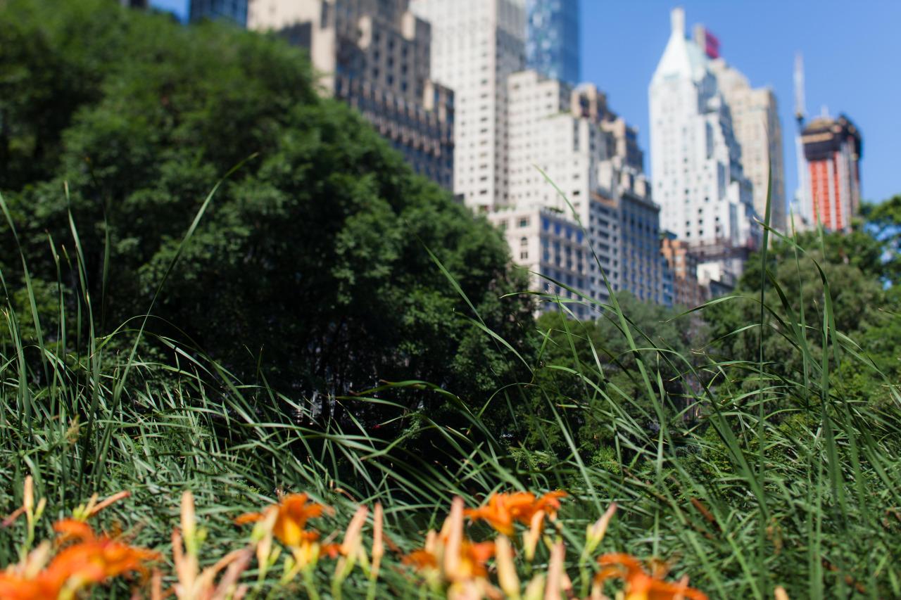 Central Park mornings. June 2016.