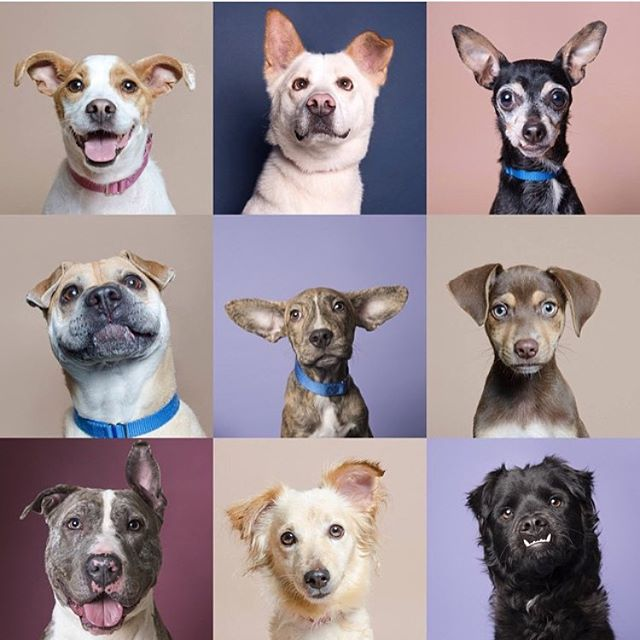 Happy #nationalmuttday everyone! #adoptdontshop. Have a great weekend!