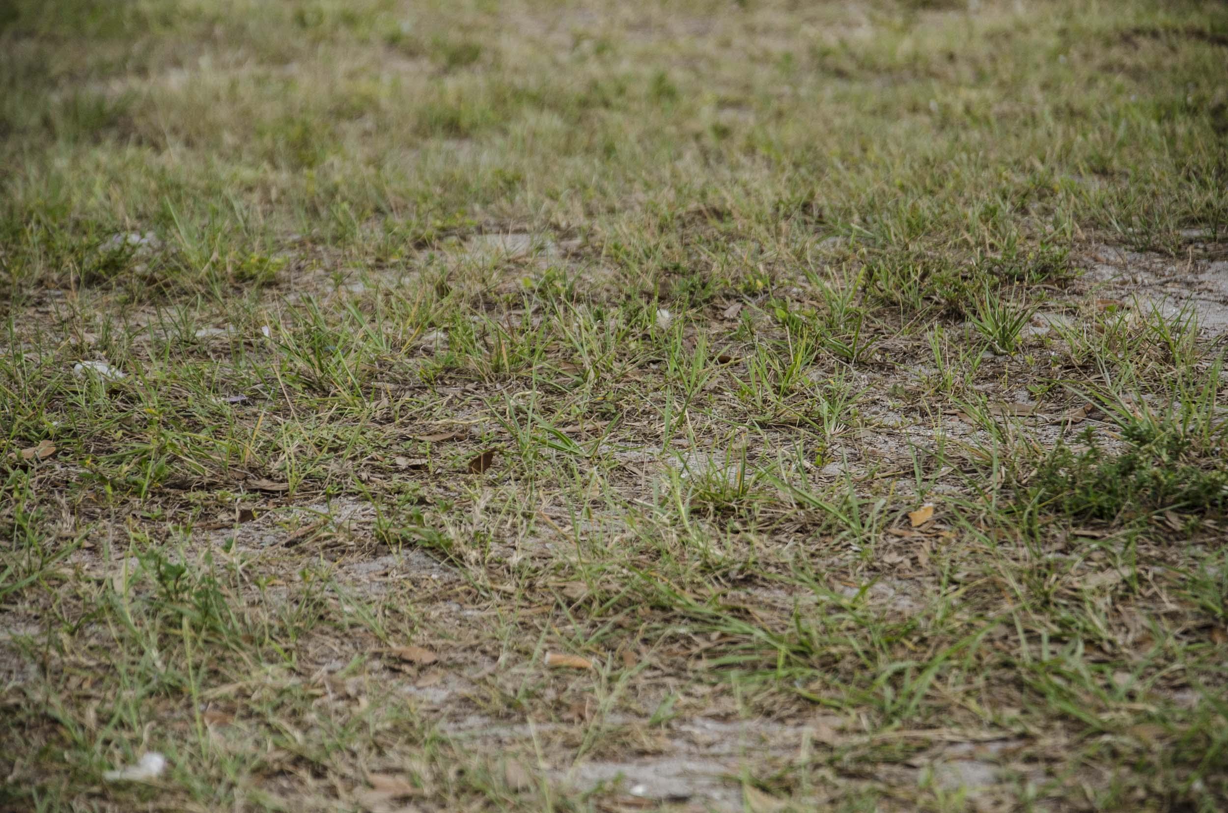 2011.03_FLORIDA_1494.jpg