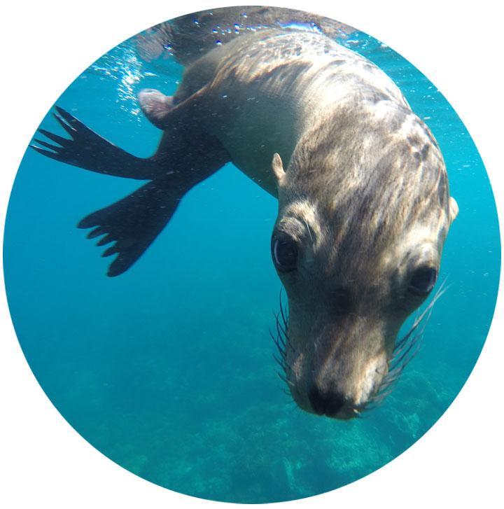sea lion  4.jpg
