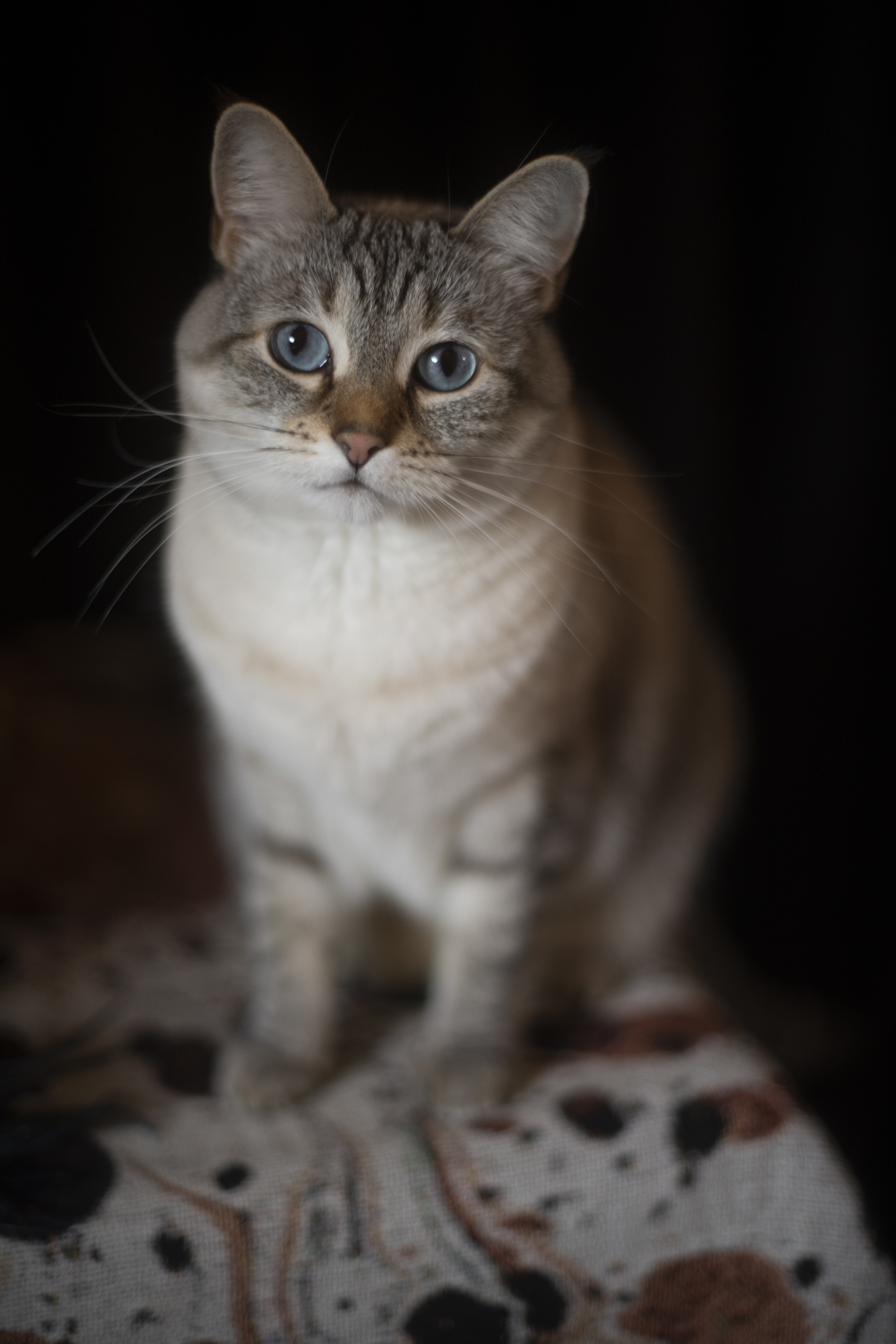 This is my kitty Sybil :)