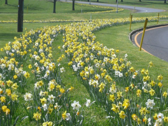 2013 Participated in planting 1 million bulbs throughout Bucks County and surrounding areas.