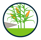 VOL_01487 C2C maize logo and icons_v2-03.png