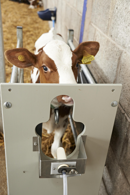Volac computerised feeder and calf 2587-198.jpg