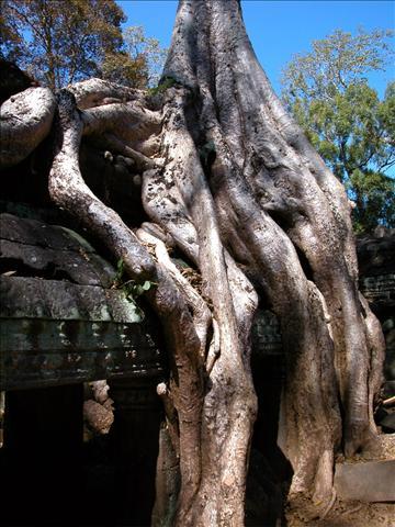 tn_480_cambodia17.jpg.jpg