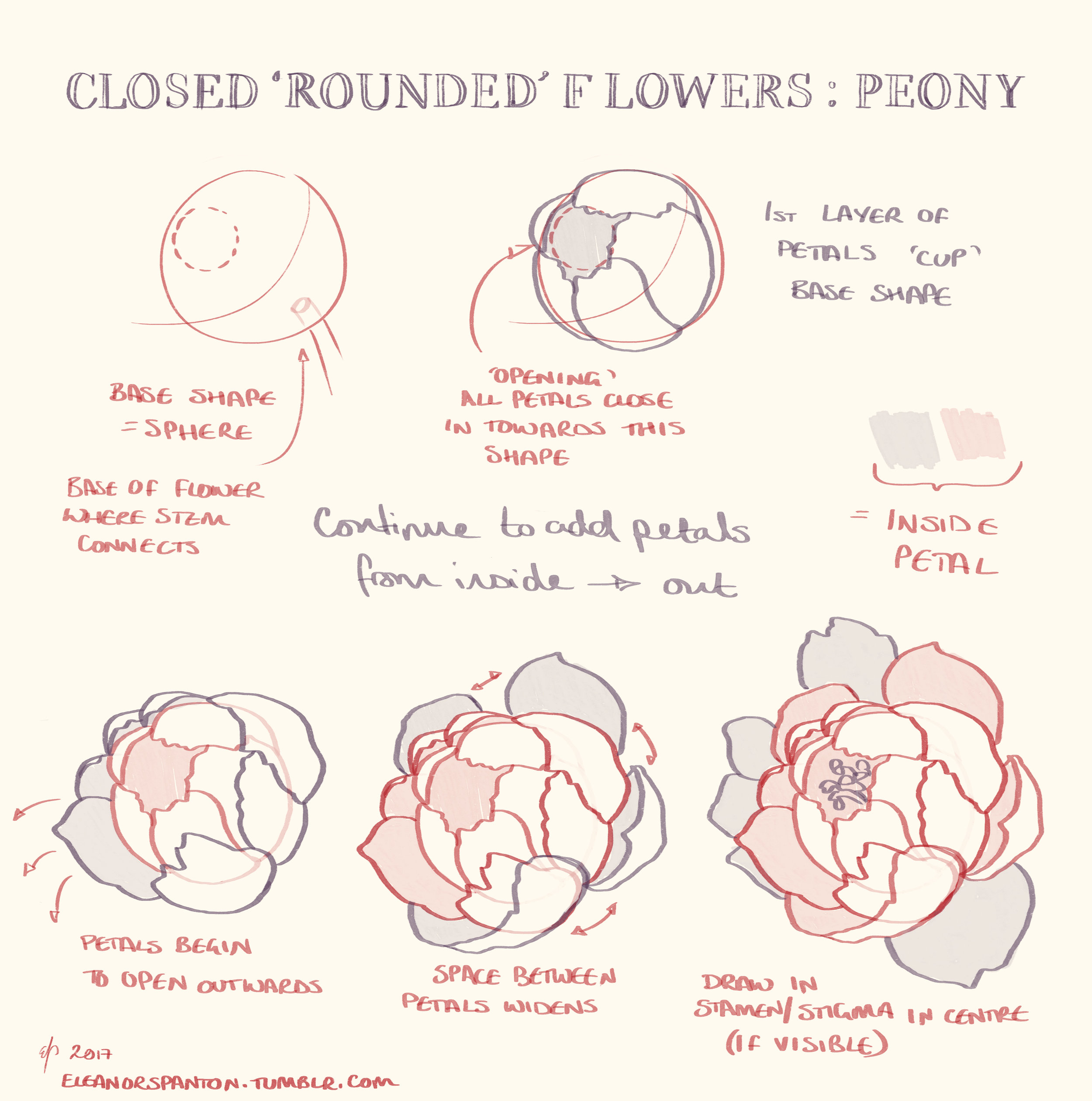 Drawing Tutorial: Peony