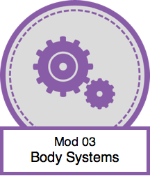 Mod 03 - Body Systems.png