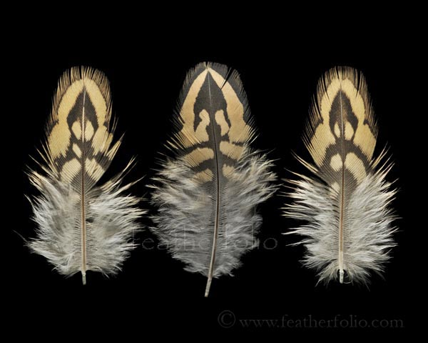 Black Francolin Feather Arrows