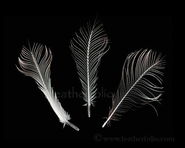 owl-feathers-face.jpg