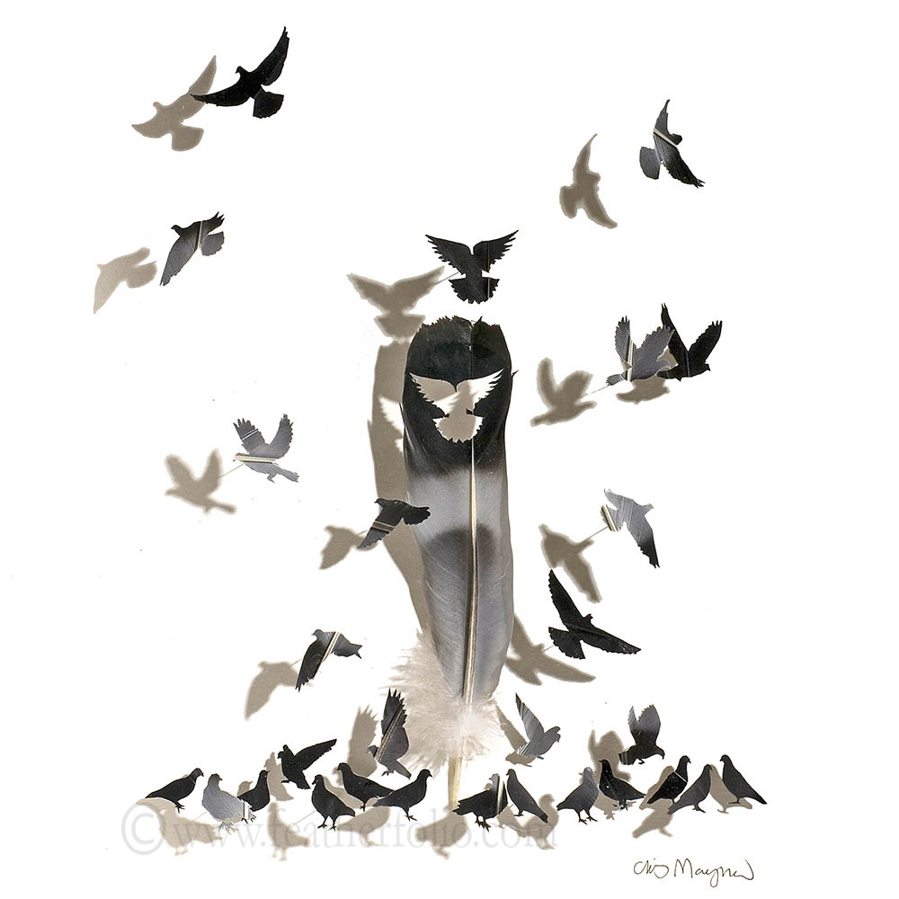 City Park Pigeons.