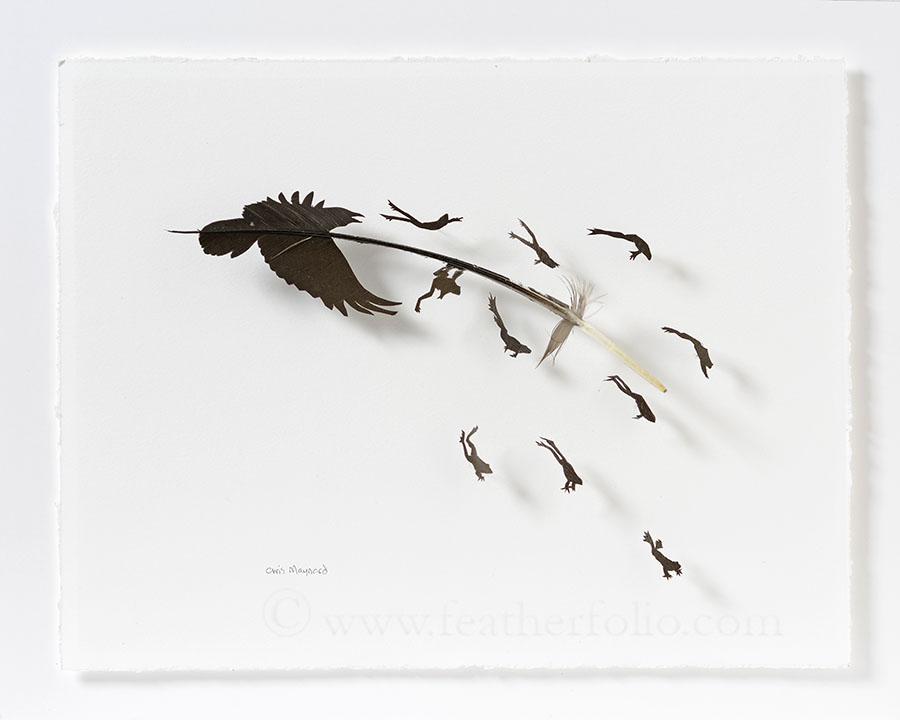 "Chris Maynard, Raven Croaks, goose feather, 12"" x 15"", 2016"