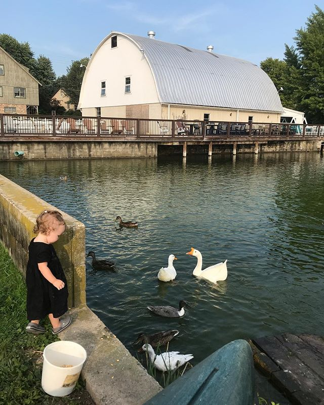 Feeding the ducks and goose with Laura last evening