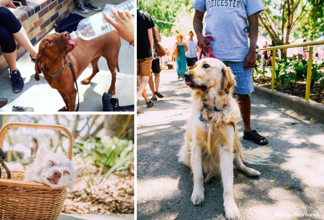 The Eumundi Markets upgrade is already being enjoyed by the local residents 4 legged friends (Instagram source: @dogsofeumundi)
