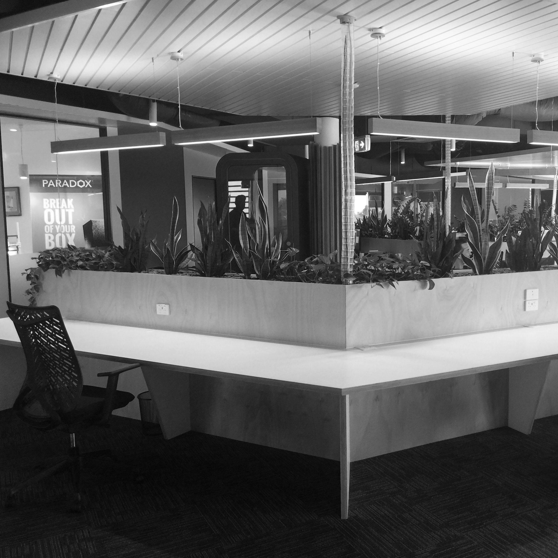 Inbox 2.0   Open floor plan with custom joinery and indoor plants
