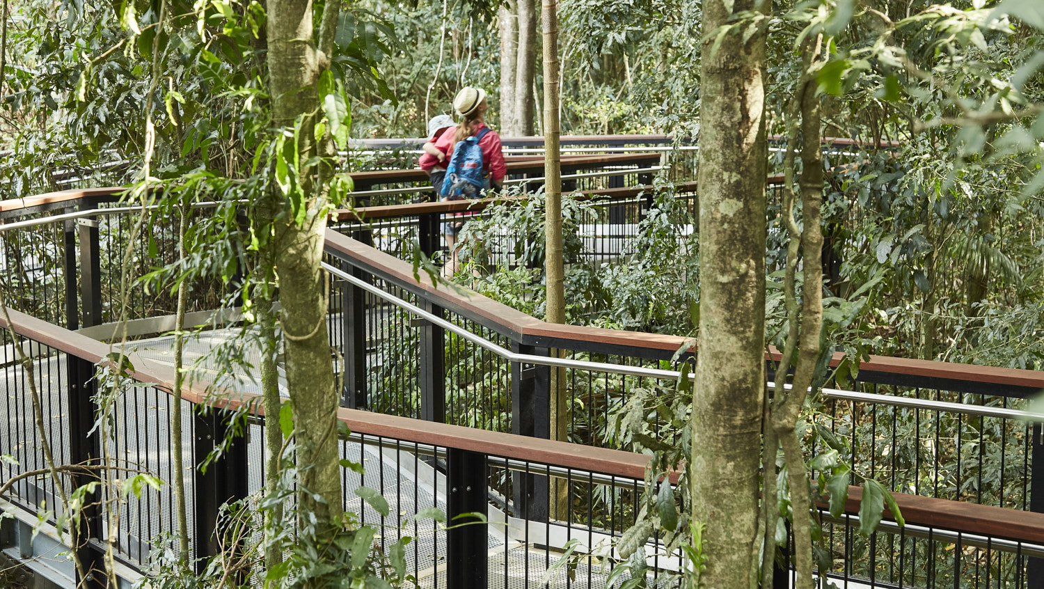 Elevated walkway through existing trees at Mary Cairncross (Photography: Scott Burrows)