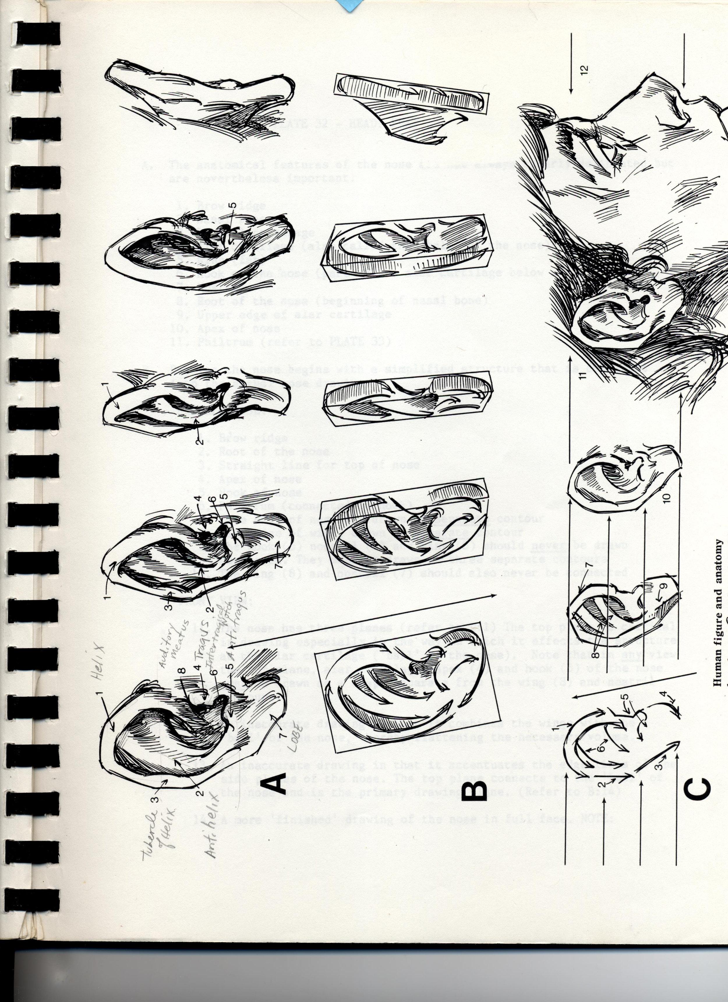 The Ear by Schmidt.jpg