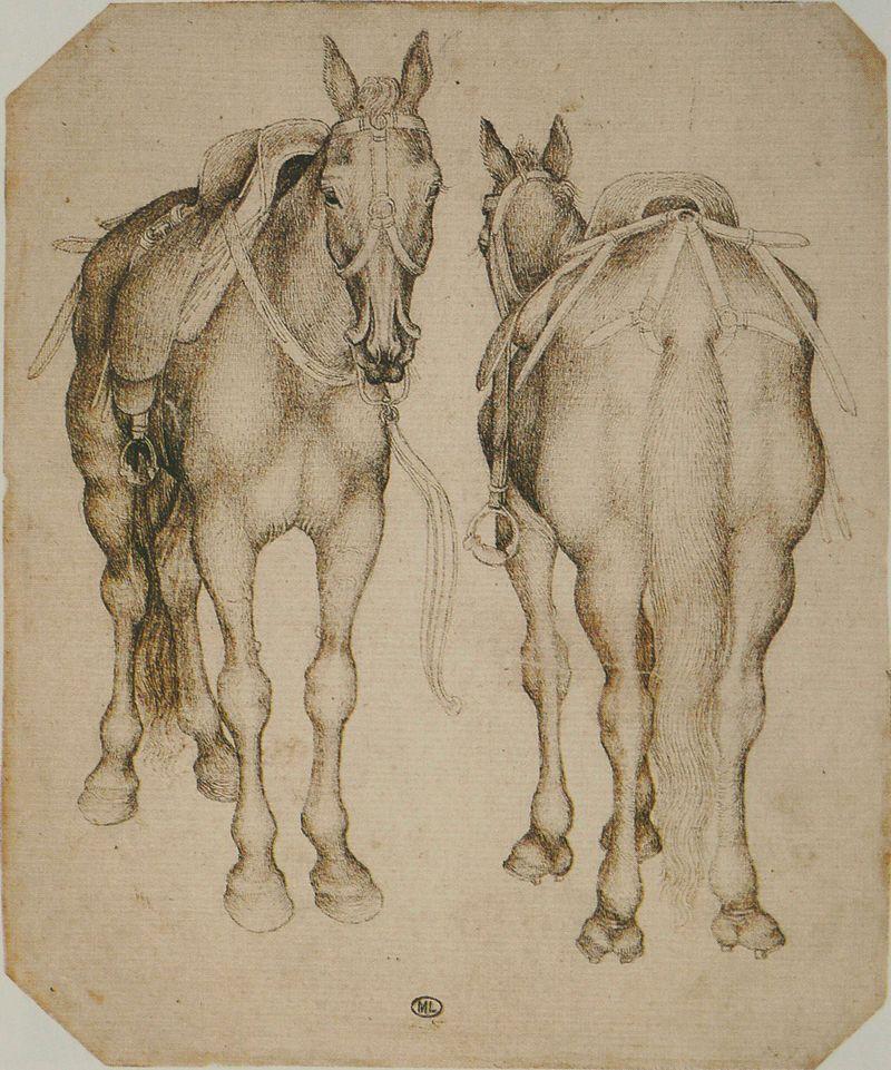 800px-Pisanello_-_Codex_Vallardi_2468.jpg