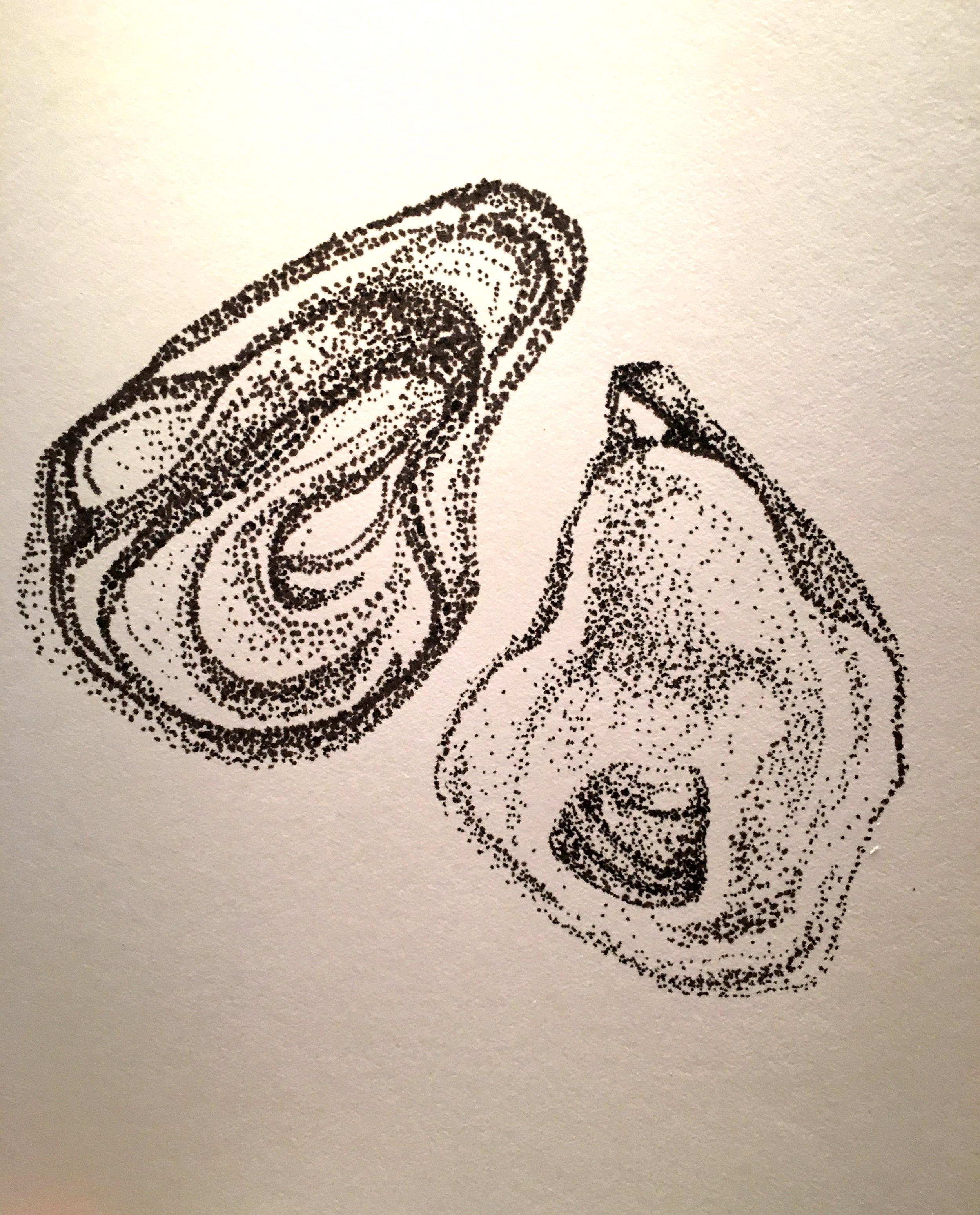 Oyster Variation