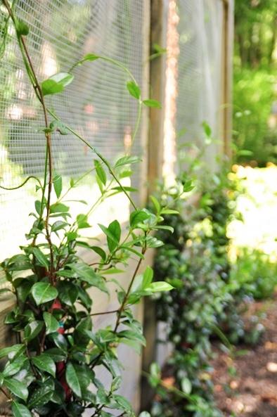 Garden Screen - Alison Giese Interiors