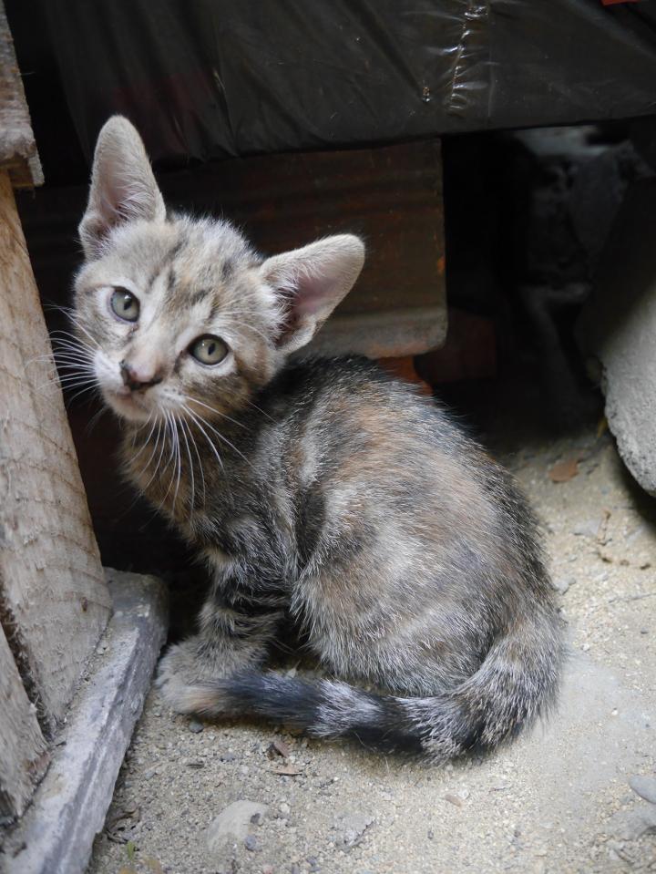 feral kitten_sm.jpg