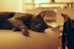 Cat at clinic_sm.jpeg