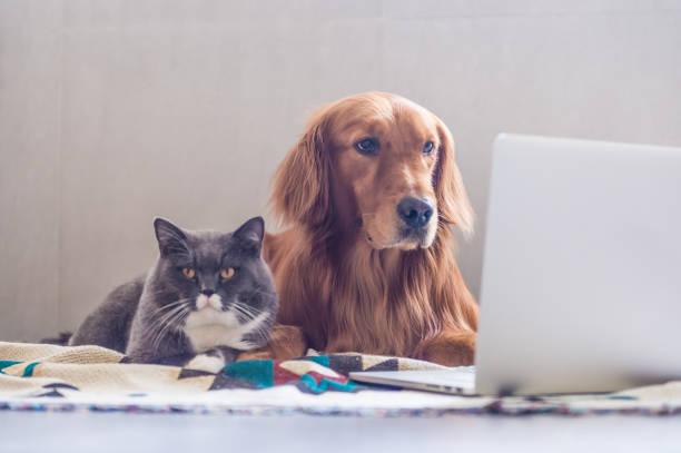 cat dog writing.jpg