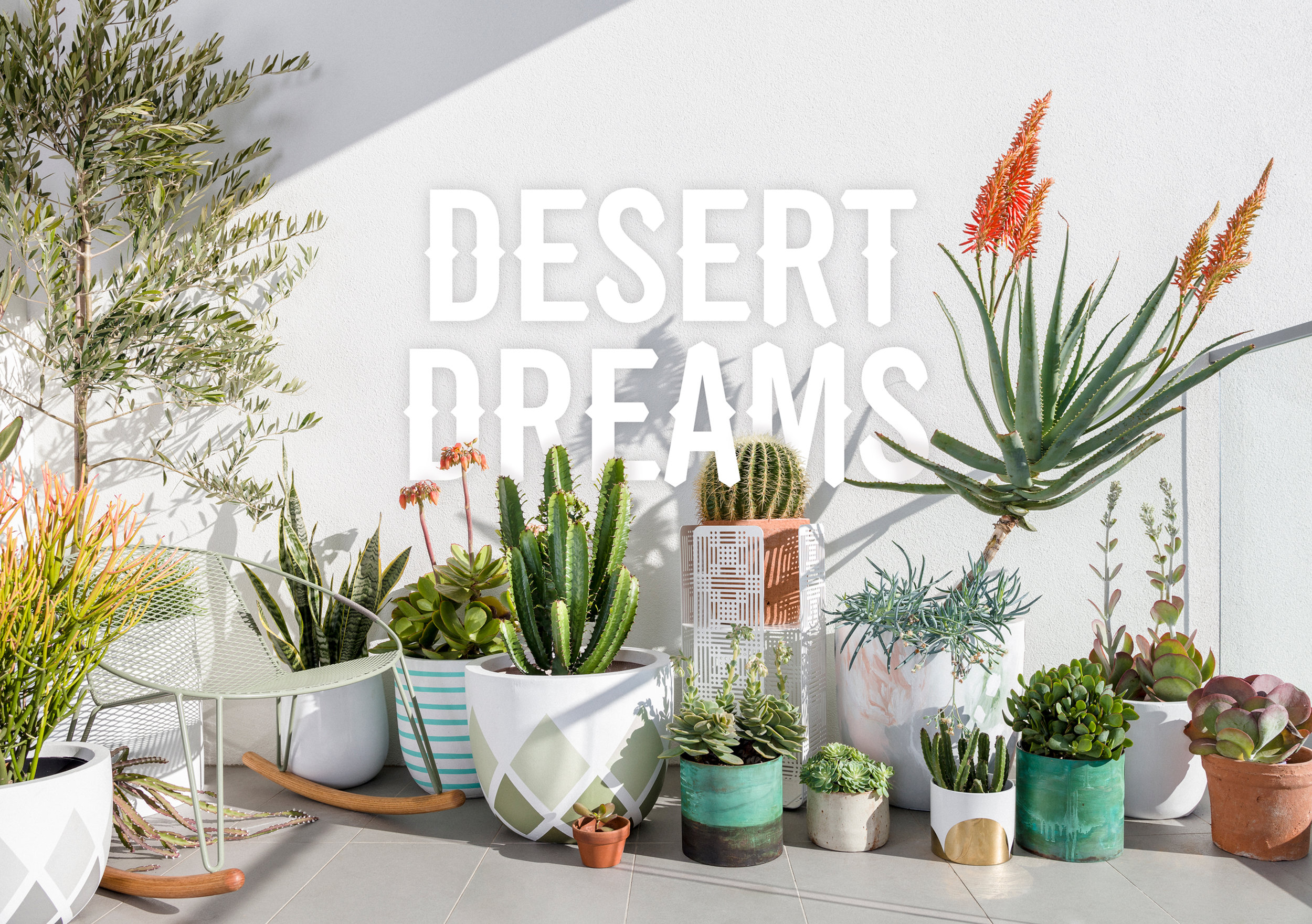 Desert Dreams - Eye-catching and easy-care, this look features a succulent mix of cactus and tough sculptural plants that will survive those days – or weeks – you forget to water them.