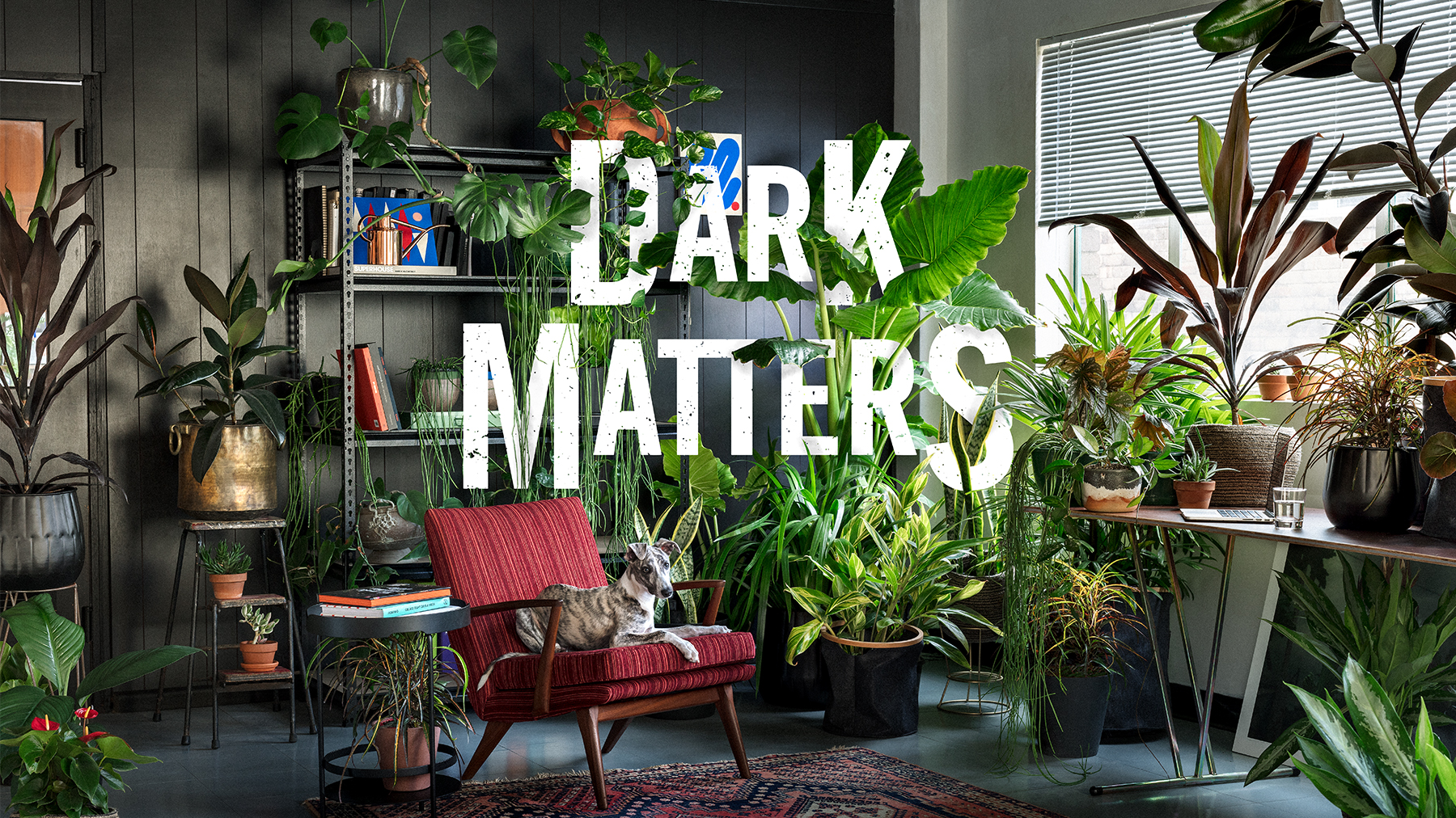 Dark Matters - Moody and lush, this dramatic look is big on foliage and textures, perfect for low light, and ideal if you want to create a space to get lost in.