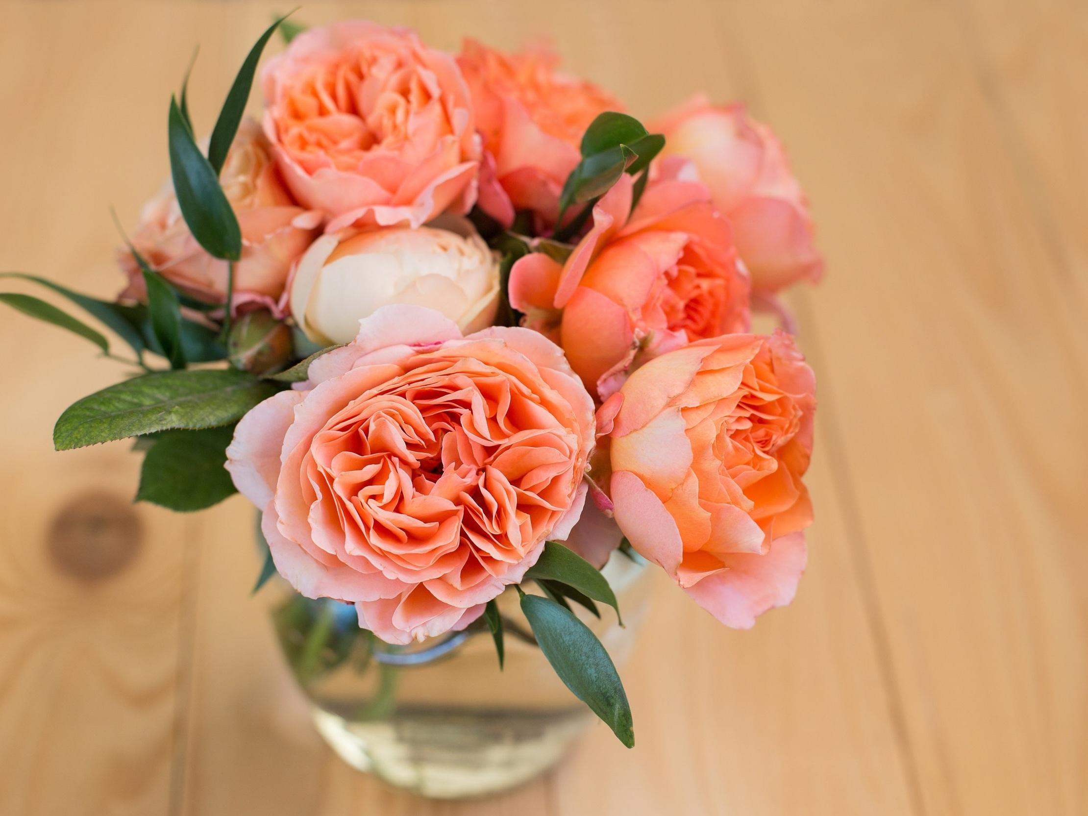 New Season Roses