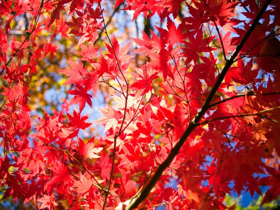 Best-Autumn-Trees-and-Plants.jpg