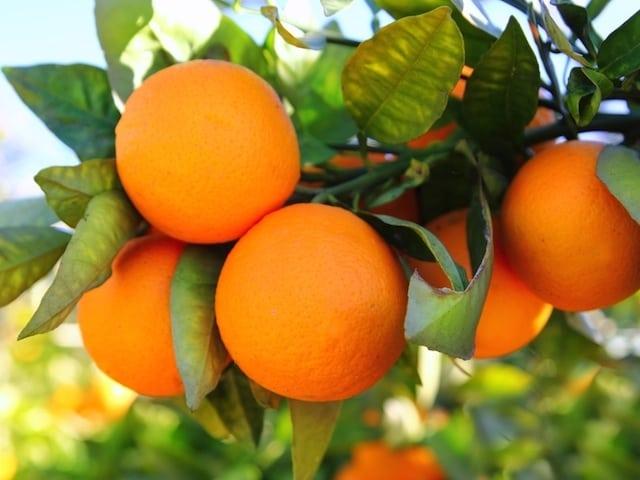 orange-val-copy-1.jpg