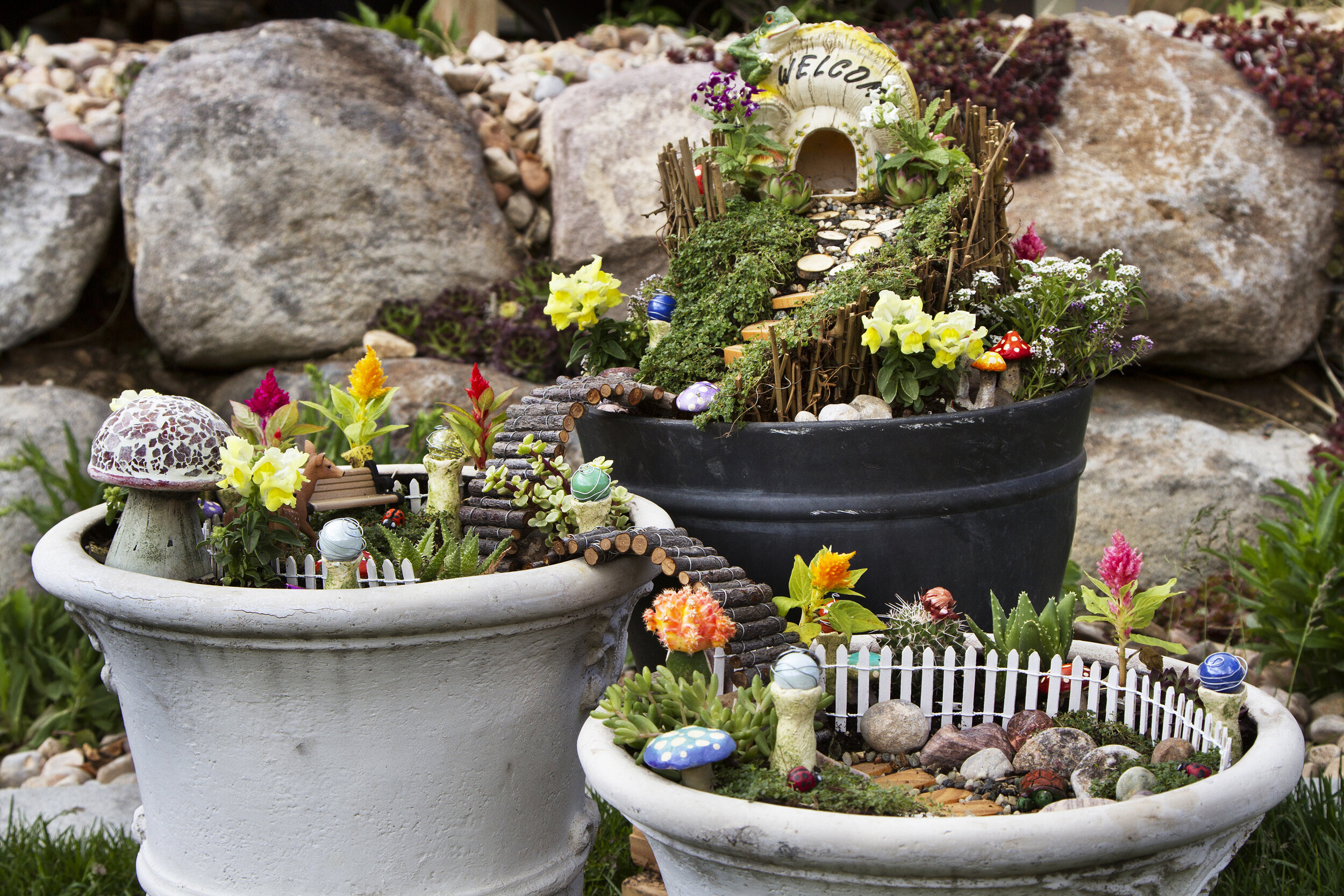 fairy garden .jpeg