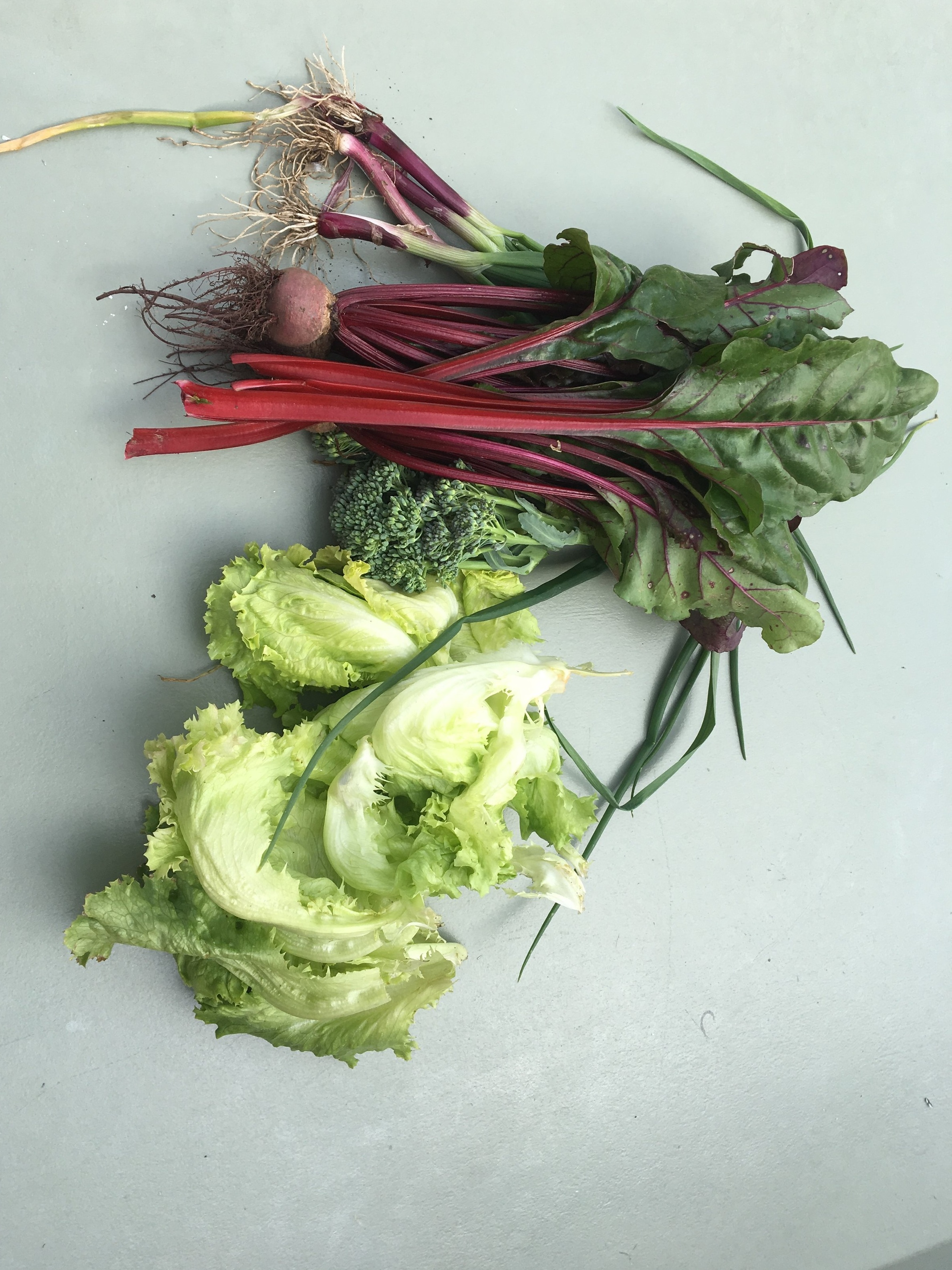 Photo: Meals picked straight from the garden