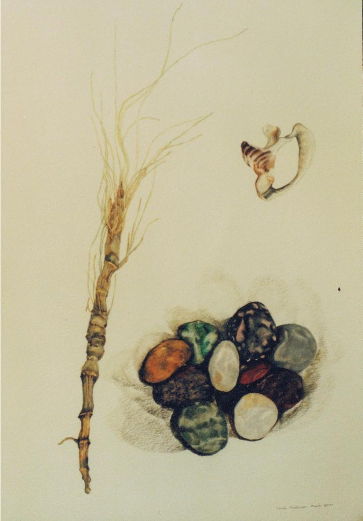 watercolour pencil on paper