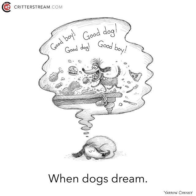 When #dogs #dream.