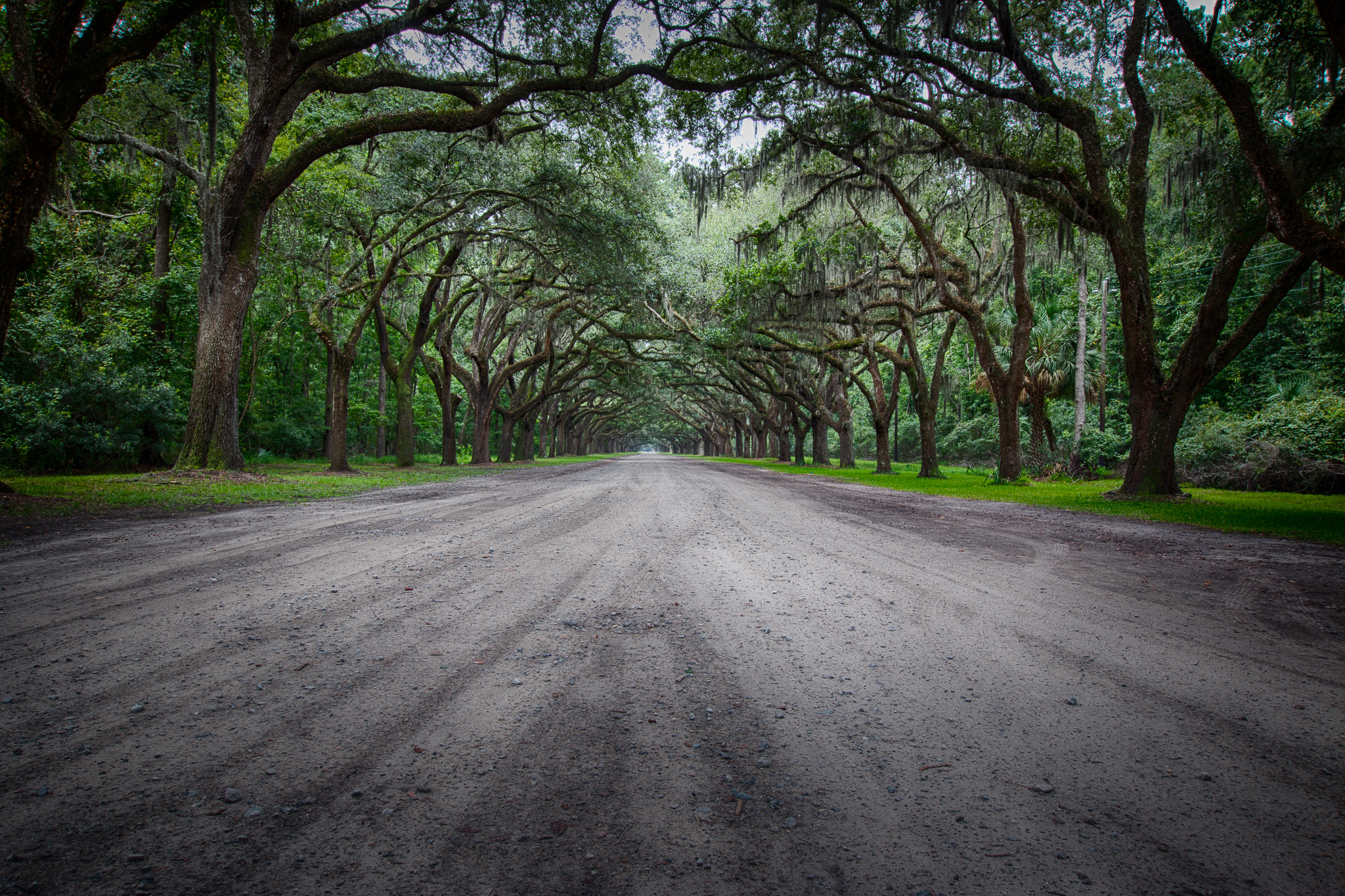Wormsloe Avenue