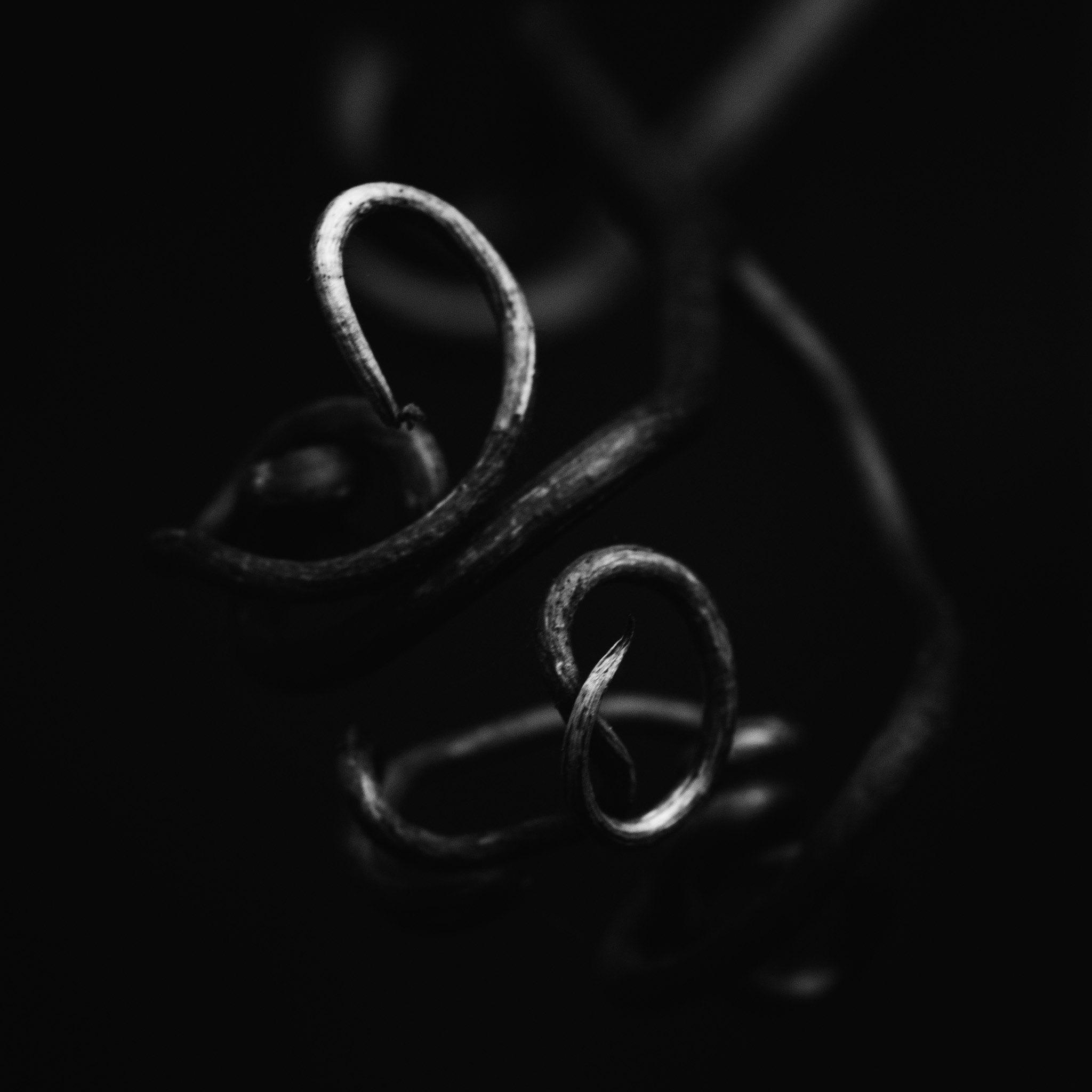 Dead Spiral.jpg